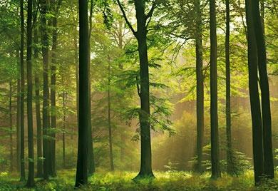 Clés de vie et sagesses de la Nature